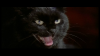 2167_The_Black_Cat6.png