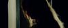 13263_Hot-Nights-of-Linda-The-screenshot04.png