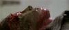 9580_Geisterstadt-der-Zombies-screenshot08.png